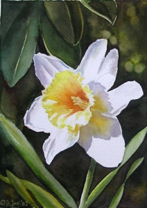 Single white daffodil, small watercolor flower painting