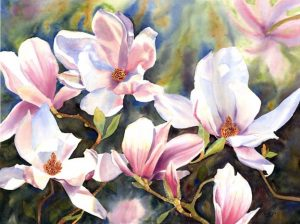 White Pink Magnolias in watercolor, Flower Painting