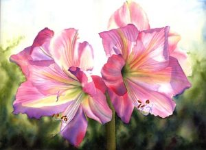 Realistic Pink Amaryllis in watercolor