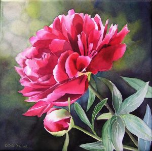Purple Magenta Peony Flower Painting in Watercolor