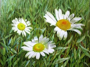 Detailed Flower Painting of White Daisies with shadows and many leaves and grass - Flower Painting