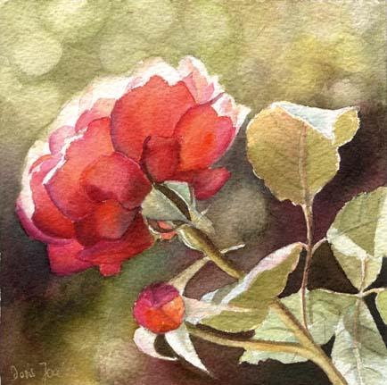 rose-amelita-6x6