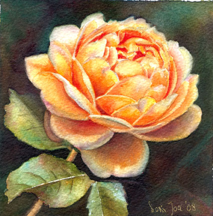 rose-golden-celebration-6x6