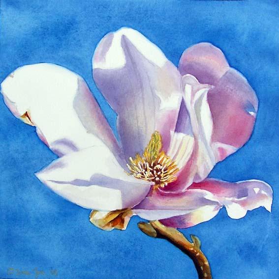 magnolia-8x83