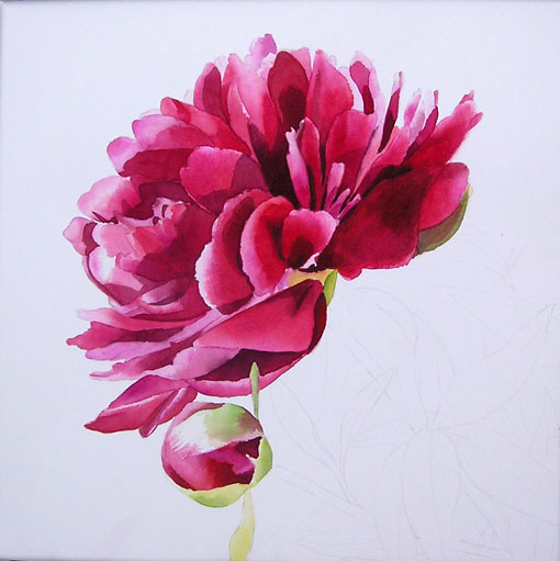 Moo Facebook Pink Peony In Watercolor