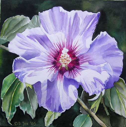 Blue Violet Hibiscus - Small flower watercolor painting 6x6 inch by Doris Joa