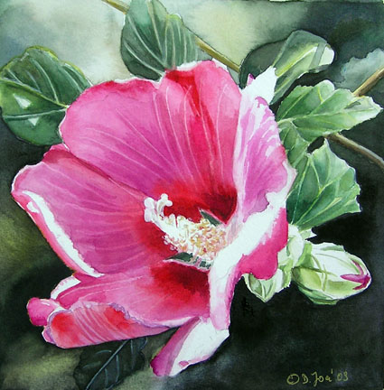 Pink Hybiscus, small flower watercolor painting 6x6 inch by Doris Joa