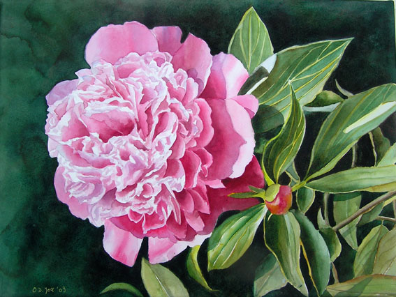 Pink Peony - flower watercolor painting, Rosa Pfingstrose - Blumen Aquarellgemälde