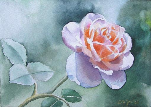 Rose Clair Renaissance - small watercolor rose painting by Doris Joa