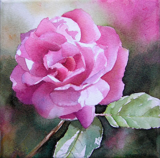 Pink Rose in Watercolor, Rosa Rose in Aquarell