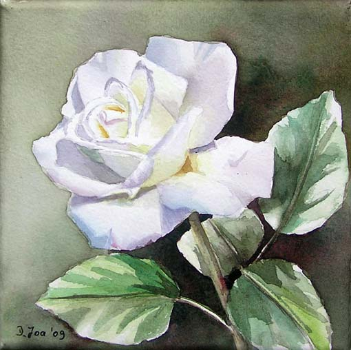 Small painting of a white rose watercolor by doris joa