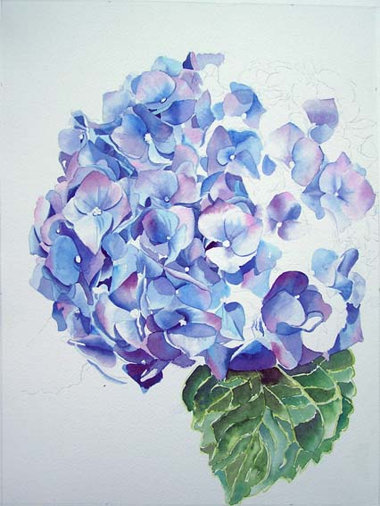 Blue Hydrangea - work in progress - Original watercolor painting by Doris Joa