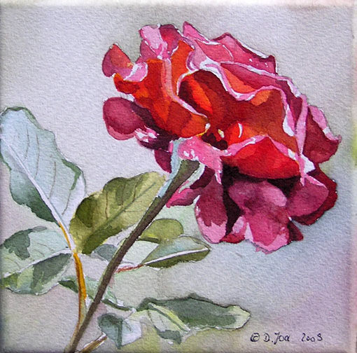 Red Rose - watercolor painting