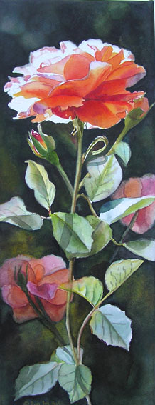 Rose Bonita Renaissance - Original watercolor painting
