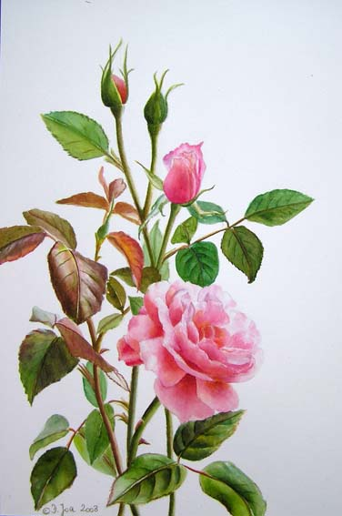 How to paint a pink rose in watercolor, Free tutorial by Doris Joa
