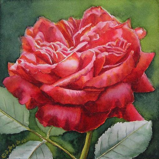 Red Rose Original Watercolor Painting Rose Gemalt In Aquarell
