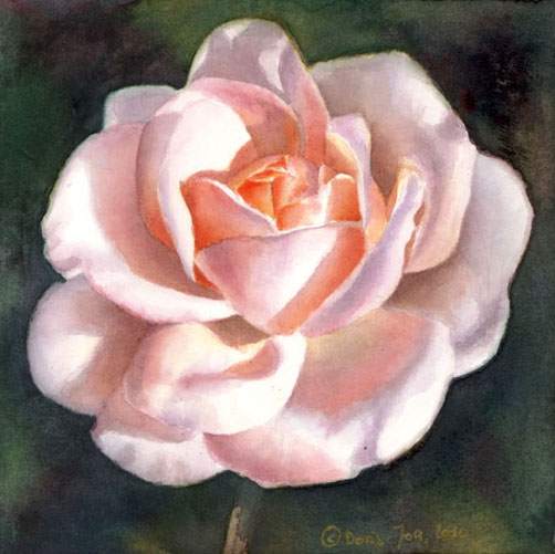 Apricot pink white rose painting - rose portrait in watercolor by Doris Joa