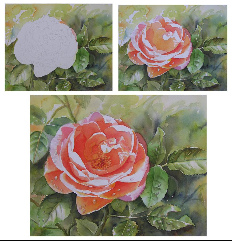 Rose Painting in a Loose Watercolor Style of the Rose Bonita Renaissance