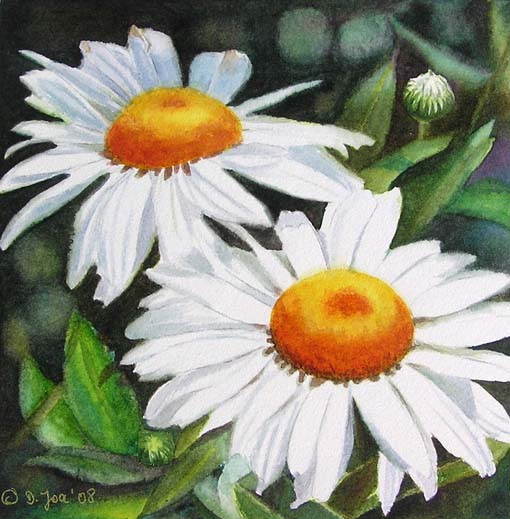 White Daises - small flower painting in watercolor - size 6x6 inch by Doris Joa