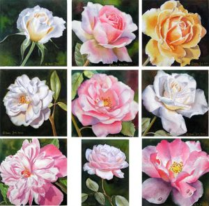 How to paint a rose, how to paint roses - Rose Painter shows her collection of painted roses in watercolor
