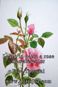 How to paint a pink rose in watercolor - botancial study with artist Doris Joa