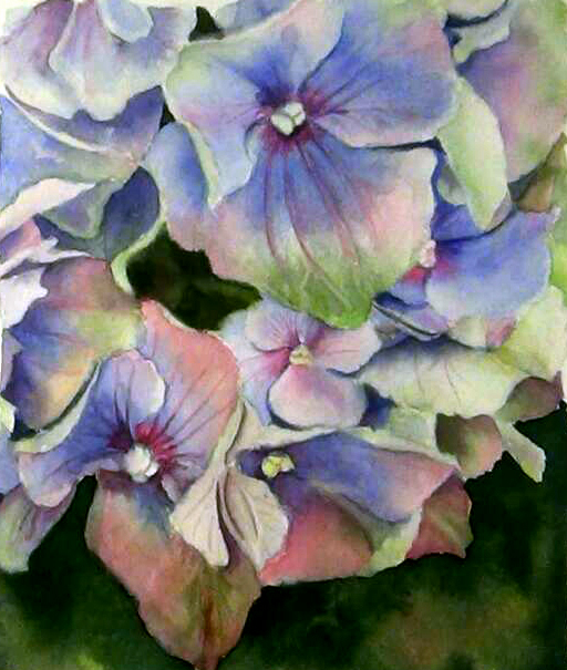 Paint multicoloured petals of a Blue Hydrangea