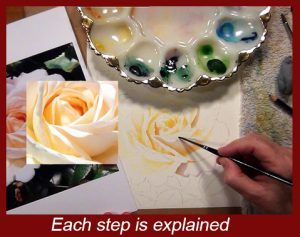 Indepth instructional painting tutorial on painting roses in watercolor