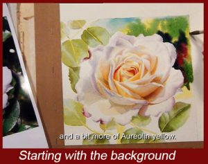 Add the background to your white rose. DVD Watercolor Lesson on painting roses