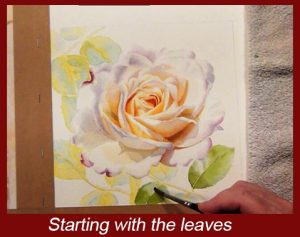 Start with painting your leaves, each step is explained, watercolor dvd lesson