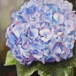 Blue Hydrangea - Watercolor Flower Painting by Doris Joa