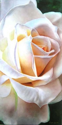 Rose Weisse Weihnacht, White Rose Watercolor Painting by Doris Joa