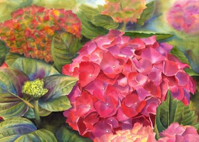 Pink Hydrangea in watercolor - Flower Painting by Doris Joa
