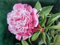 Pink Peony Flower Painting in Watercolor by Doris Joa