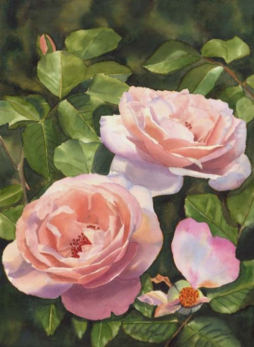 apricot pink white rose - Rose Clair Renaissance III - Watercolor Painting by fine artist Doris Joa