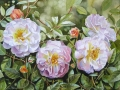 White and Pink Roses with full blooms and buds and leaves with complete background - Watercolor Painting by Doris Joa