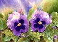 Blue Pansies in Watercolor - Painting Flowers by Doris Joa