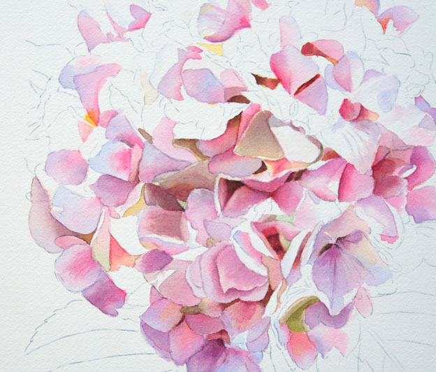 Pink Hydrangea - Watercolor Painting- Work in Progress