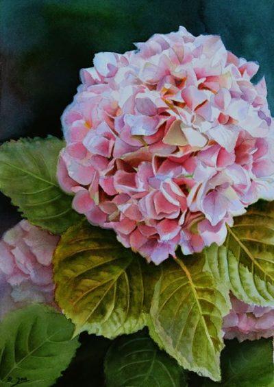 Pink Hydrangea Watercolor Painting by Doris Joa