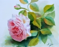pink rose with leaves - Watercolor Rose Painting by Doris Joa
