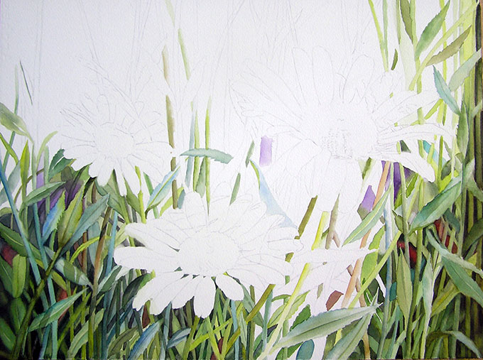 Watercolor Painting - White Daisies