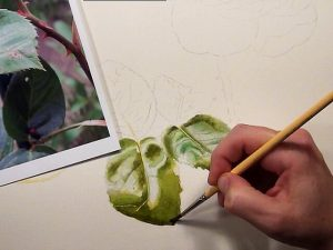 Watercolor Instruction Lesson on DVD - How to paint leaves