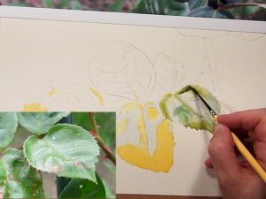 Watercolor DVD How to paint Leaves - Watercolor Lesson