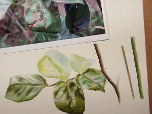 How to paint leaves - Watercolor Lesson on DVD and Online Lesson