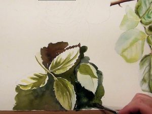 Learn how to paint realistic and painterly leaves - 5 Leaf Studies explained