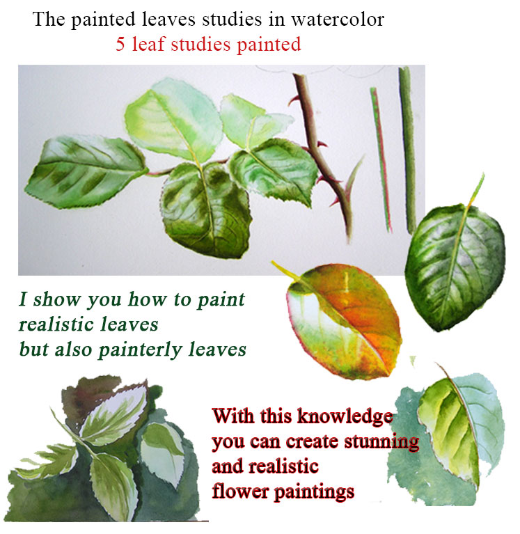 painting leaves in watercolour watercolor dvd workshop