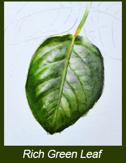 Leaf With Rich Green Colour