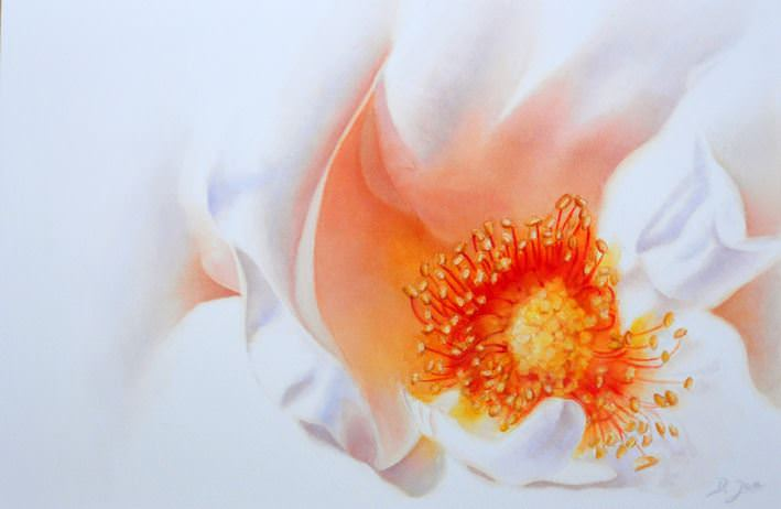 Painting the inner of a rose, make the stamens the focal point of a white rose