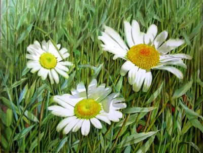 White Daisies -Realistic Watercolor Painting by Doris Joa