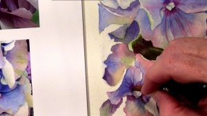 Painting the multi coloured petals of a Blue Hydrangea