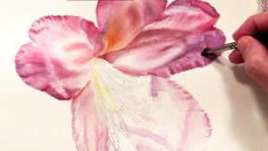 Work in Progress of a Pink Rhododendron in watercolor - available as online lesson